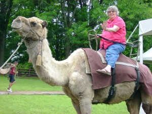 The Rockwood Residents of St. Louis Riding Camels